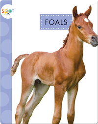 Baby Farm Animals: Foals