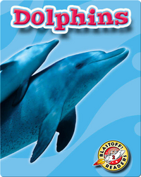 Dolphins: Oceans Alive
