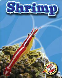 Shrimp: Oceans Alive