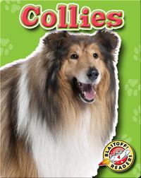 Collies: Dog Breeds