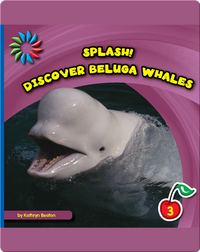 Discover Beluga Whales