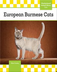 European Burmese Cats