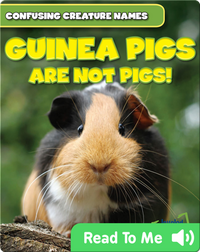 Guinea Pigs Are Not Pigs!