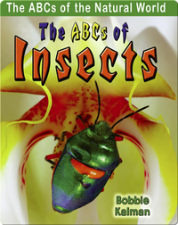 The ABCs of Insects