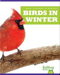 What Happens In Winter? Birds In Winter