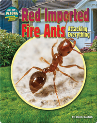 Red Imported Fire Ants: Attacking Everything!