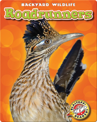 Backyard Wildlife: Roadrunners