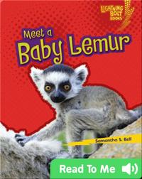Meet a Baby Lemur
