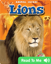 Lions: Animal Safari