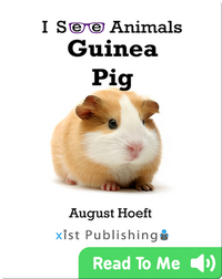 I See Animals: Guinea Pig